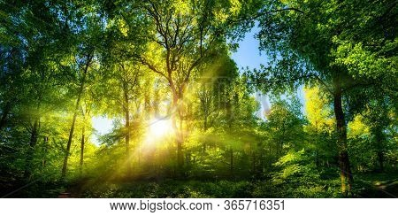 Vivid Scenery Of Beautiful Sunlight In A Lush Green Forest, With Vibrant Colors And Pleasant Contras