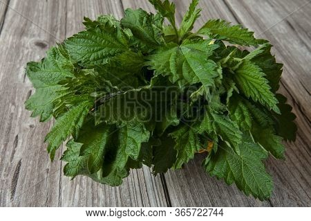 Fresh Leaves Of Nettle Dioecious Close-up On A Wooden Background. Alternative Medicine, Medicinal He