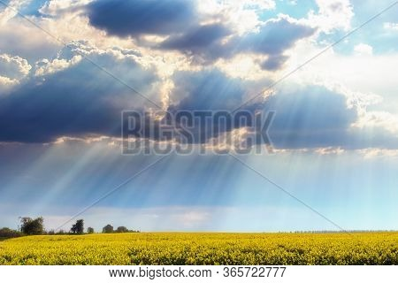 Scenic Spring Landscape Of Colorful Field And Trees On Horizon. Field With Rapeseed. Colorful Vibran