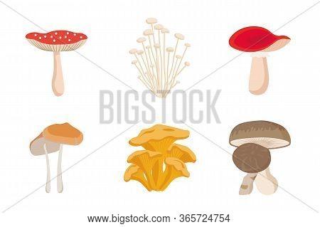 Mushrooms Set. Different Mushrooms. Mushrooms Vector Such As Champignon, Chanterelle, Shiitake