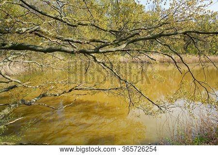Idyllic Lake In The Kreuzhorst Nature Reserve Near Magdeburg In Germany