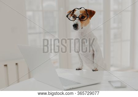 Horizontal Shot Of Jack Russell Terrier Dog Leans Paws On White Table, Wears Funny Transparent Glass