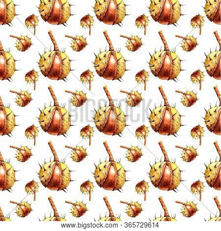 Chestnuts On White Background, Repeated, Seamless, Illustration. Repeated Watercolor Chestnut On Whi