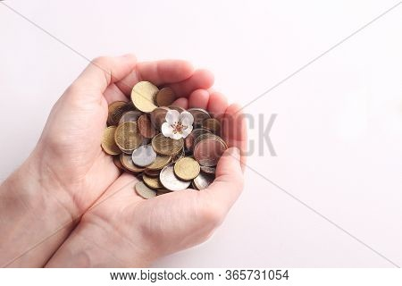 Green Sprout Sprouts From A Pile Of Coins In His Hands On A White Background. Isolated. Invest Your