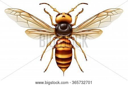 Murder Hornet Or Asian Giant Insect As A Huge Predator That Kills Honeybees As An Animal Concept For