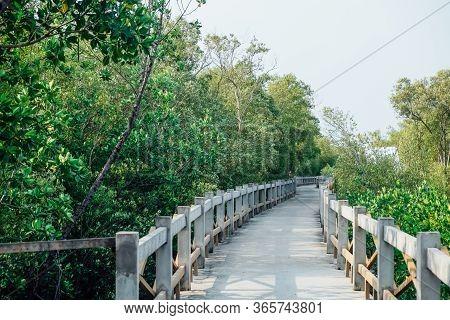 Calm And Beautiful Walking Path In Flourishing Mangrove Forrest In Bangkok