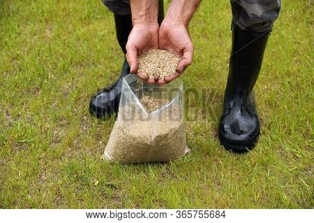 Preparations For Compacting Sowing. The Man Presents Grass Seeds.