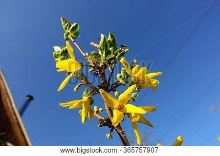 Close-up Of Yellow Flowers On A Background Of Blue Sky