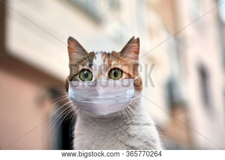 The Distraught Stray Cat On Istanbul Street Wears A Protective Facemask Or Surgical Mask During Quar
