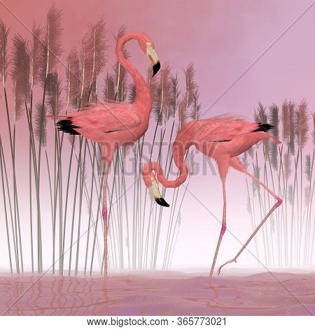 American Flamingoes 3d Illustration - A Male And Female Flamingo Are Filter-feeders And Usually Live