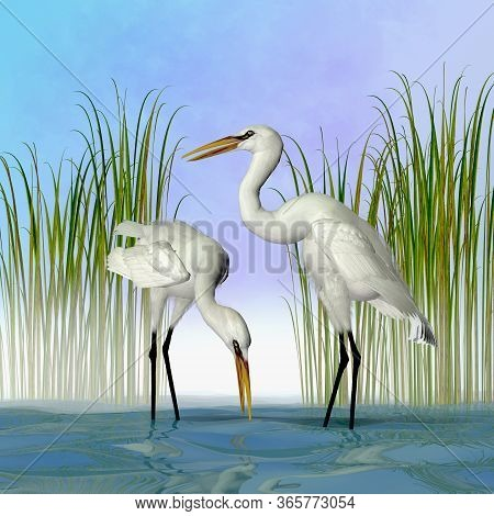 Great White Egrets 3d Illustration - The Great Egret Is A Tall Standing Avian Waterbird That Lives I