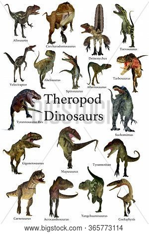 Theropod Dinosaurs 3d Illustration - A Collection Set Of Theropod Carnivorous Dinosaurs From The Cre