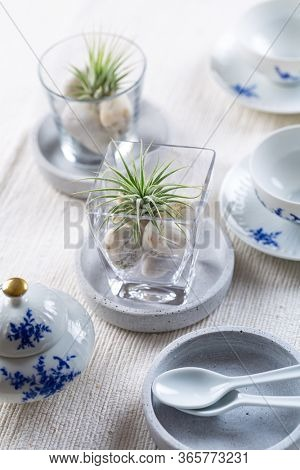 Place setting  - Home table decoration with Tillandsia air plants