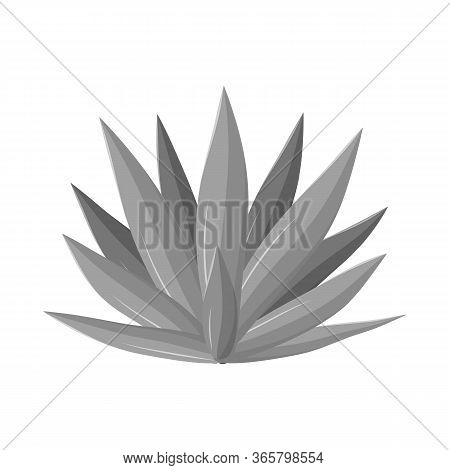Isolated Object Of Agave And Tequila Logo. Web Element Of Agave And Blue Stock Symbol For Web.