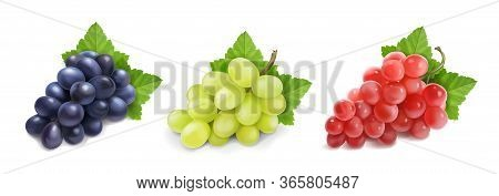 Different Wine Grapes. Green Grapes, Black And Red Pink Muscatel Grape Banches 3d Vector Icon Set