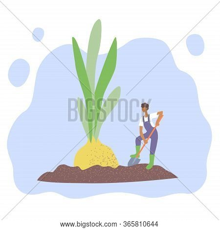 The Concept Of Gardening And Agriculture. Farmer Cares For Plants And Loosens The Soil.  Onion With