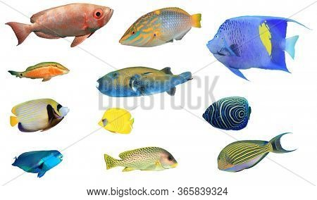 Sea fish isolated. Collection of reef fish cutout on white background. Wrasse,angelfish,butterflyfish,parrotfish,bigeyes and sweetlips