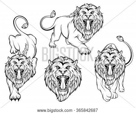 Set Of Angry, Roar Lion. Lion King Stands In Different Poses. Predator Animal. Lion Color Logo. Anim