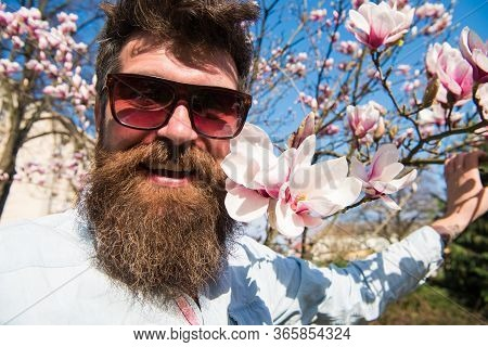 Man With Beard And Mustache Wears Sunglasses On Sunny Day, Magnolia Flowers On Background. Hipster H