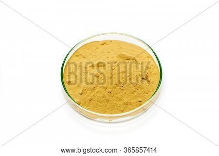Calcium carbonate salt in petri dish on white background