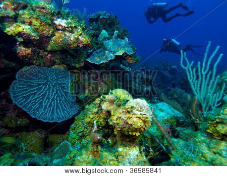 Colorfull Reef And Group Of Divers, Cayo Largo, Cuba