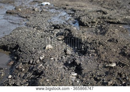 Dirt Wet Soil Background. Grunge Earth. Dirt. Copy Space
