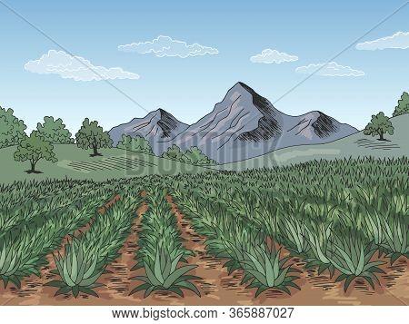 Agave Field Plantation Graphic Color Landscape Sketch Illustration Vector
