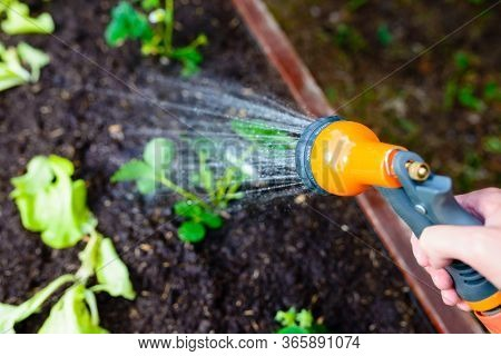 Watering A Greengrocer With Fresh Vegetable Seedlings Using A Garden Hose - Focus On The Spray Gun