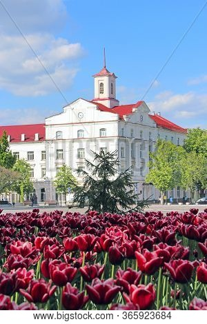 Flowerbed Decoration. Many Tulips Grow In City. Beautiful Spring Tulips On Flower Bed In City In Bri
