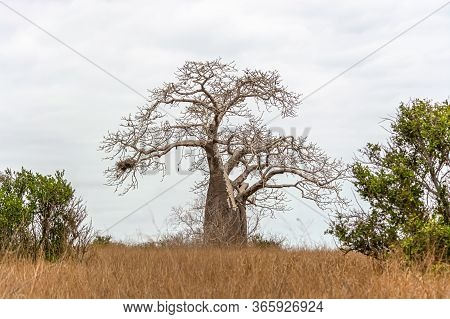 View With Typical Tropical Landscape, Baobab And Other Trees And Other Types Of Vegetation, Cloudy S