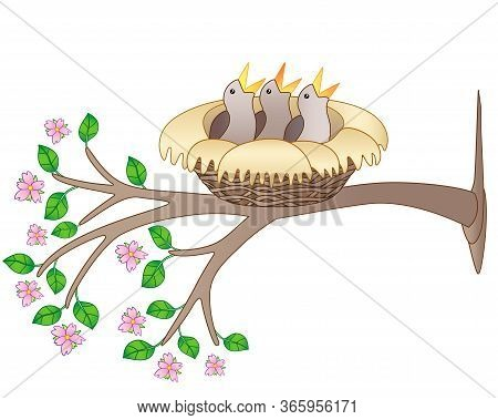 Three Chicks Are Sitting In A Cozy Nest On A Flowering Branch - Vector Full Color Picture. Spring Br