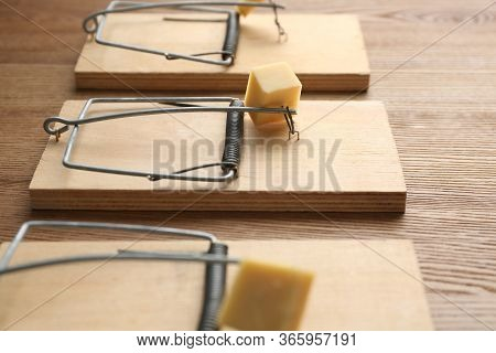 Mousetraps With Pieces Of Cheese On Wooden Background, Closeup. Pest Control