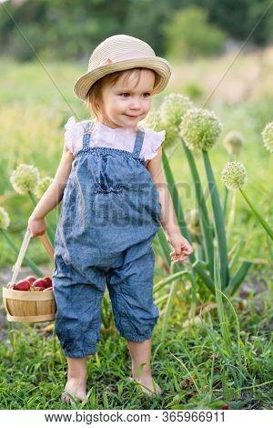 Child Picking Strawberries. Healthy Food For Children.