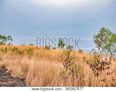 Beautiful Field On Phu Kradueng Mountain National Park In Loei City Thailand.phu Kradueng Mountain N