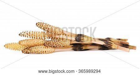 Horsetail Isolated On White Background (arvense Equisetum). The Plant Is Used Both In Medicine And I