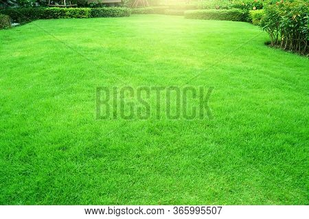 Garden With Fresh Green Grass Both Shrub And Flower Front Lawn Background, Garden Landscape Design F