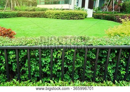Green Lawns, Front Lawn For Background, Garden Design, Beautiful Shady Landscape, House With Garden,