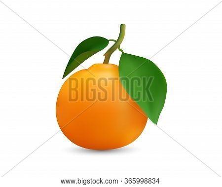 Realestic Vector Image Of Orange Fruit. Fresh Orange Isolated On White Background Isolate The Image