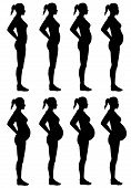 A side view illustration of 8 female silhouette's in different stages of pregnancy. Isolated on a solid white background. poster