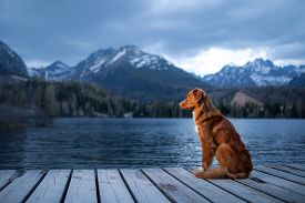Dog On A Wooden Bridge By The Lake On A Background Of Mountains. Evening View. Traveling With Pets I