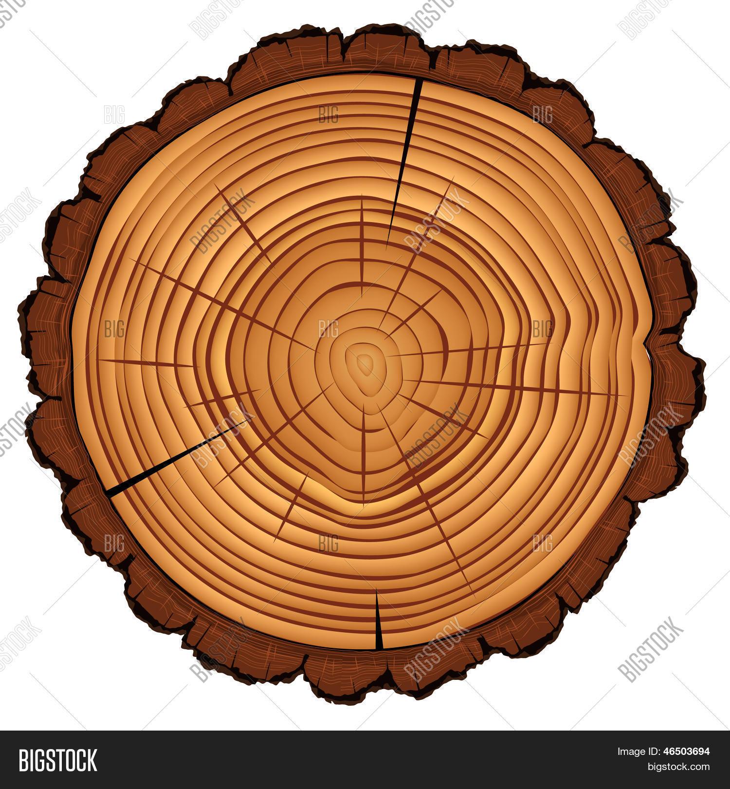 Image vectorielle et photo de essai gratuit bigstock - Coupe transversale d un tronc d arbre ...