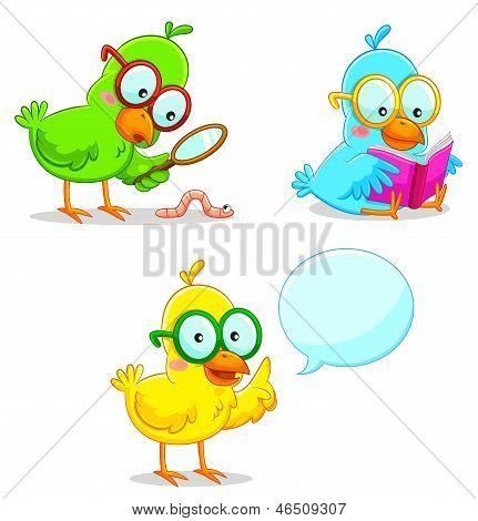 Pássaros inteligentes