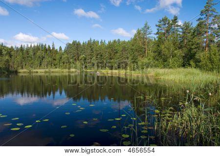 Forest Lake Coast