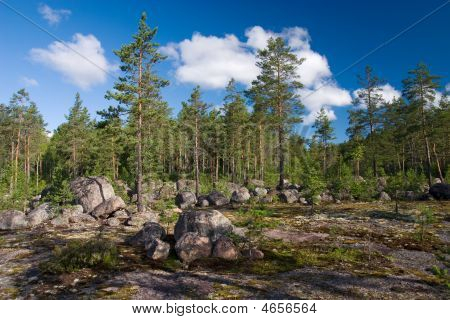 Stony Forest Field