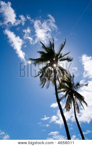 Palm Trees Silhouette On Beautiful Blue Sky With White Clouds