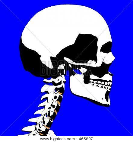Skull 50