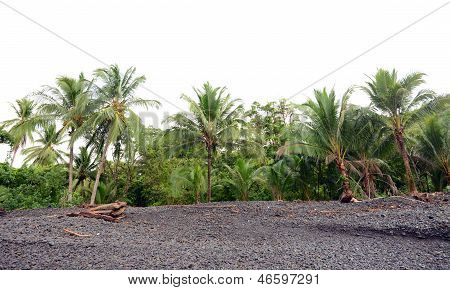 Line Of Palm Trees In Tropical Rainforest