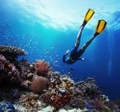 Freediver gliding underwater over vivid coral reef poster