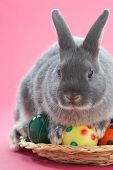 rabbit on pink background with easter eggs poster