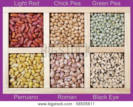 Many Kinds Of Beans